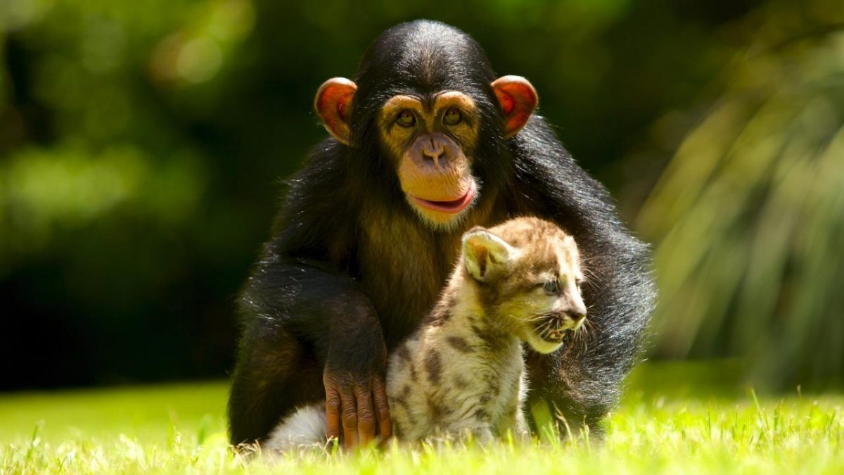 10 foto di animali