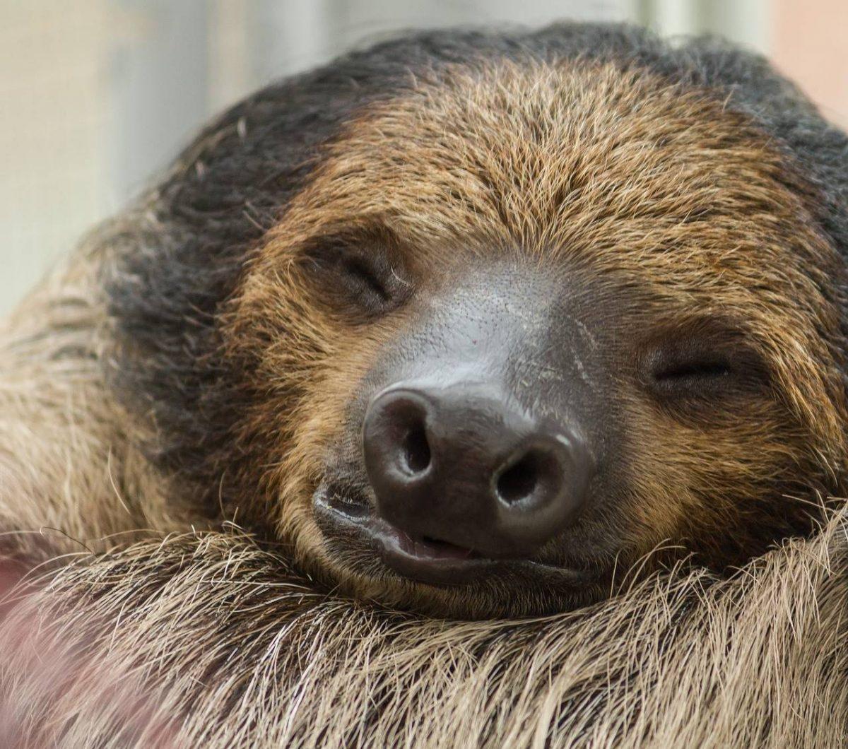 vita da bradipo